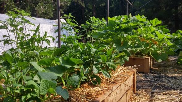 garden-1387011_1920