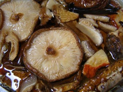 mushroom-911942_1920
