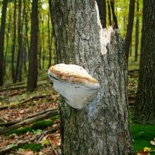 tinder-fungus-1817040_1920