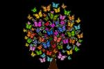 butterflies-2713343__340