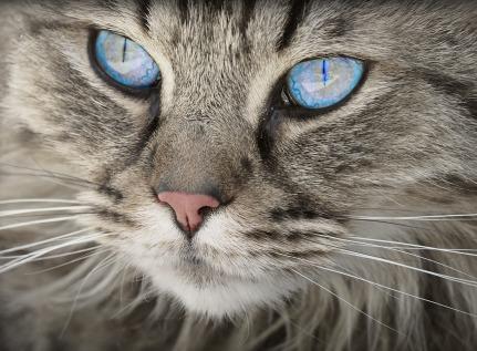 cat-1508613_1280