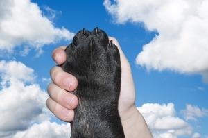 dog-2383071_1280