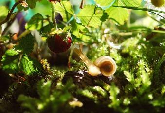 snail-582194_1920