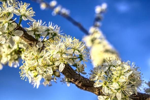 blossom-4071859_960_720