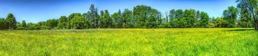 meadow-3383969_960_720