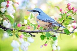 spring-bird-2295431_1280