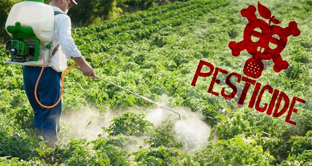 Si vous n'étiez pas là : compte-rendu de l'atelier jardin sur : le danger desPesticides
